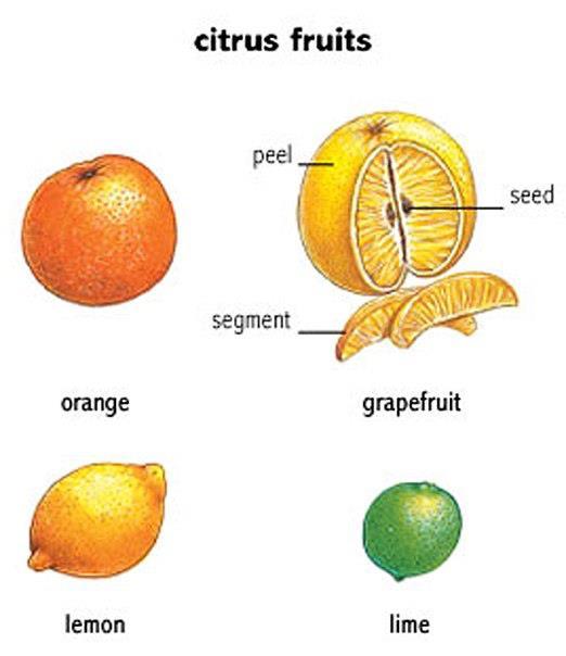 Citrus Fruits Learning Basic English