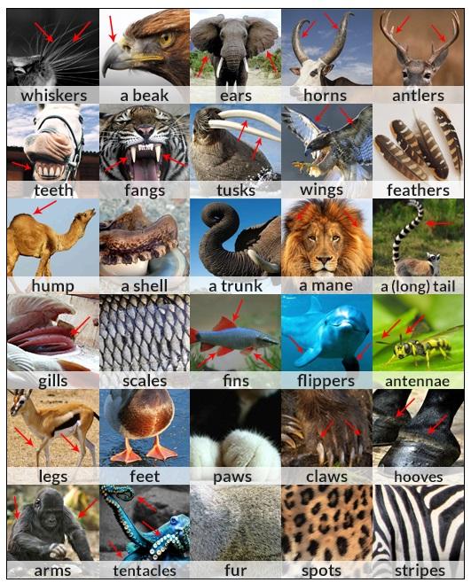 animal body parts vocabulary exercise
