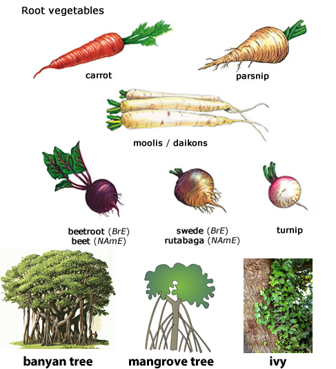 Learning about different types of roots