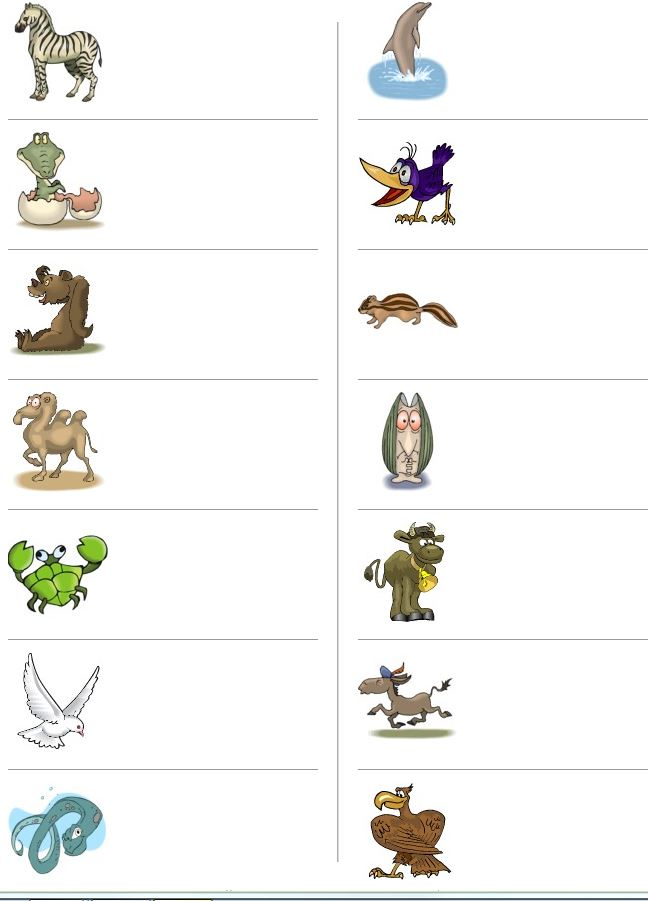 Spelling different animals English exercise