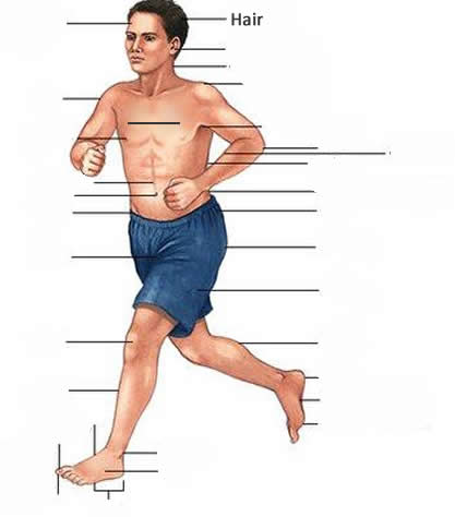 body parts exercise about the human body english