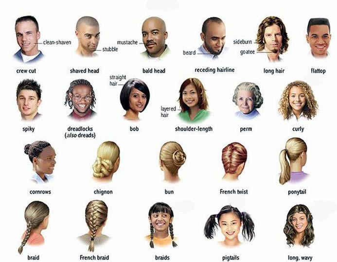 all type hair style hair and the different types learning 8144