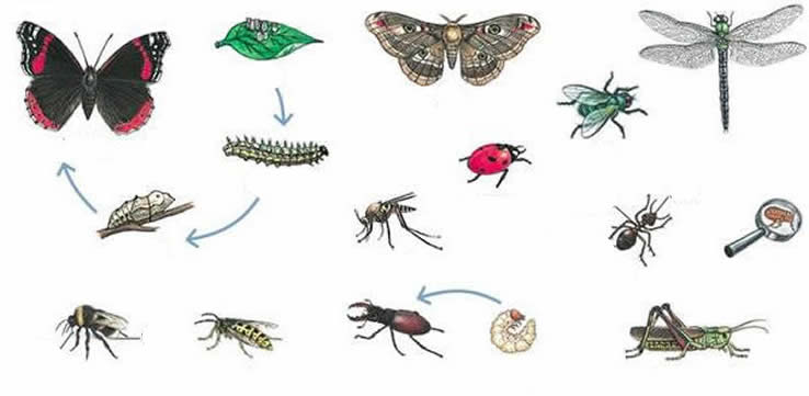 Different insects exercise