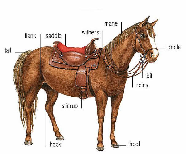 Learning about horse parts