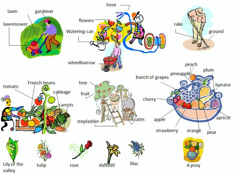 Garden or yard vocabulary with pictures learning English