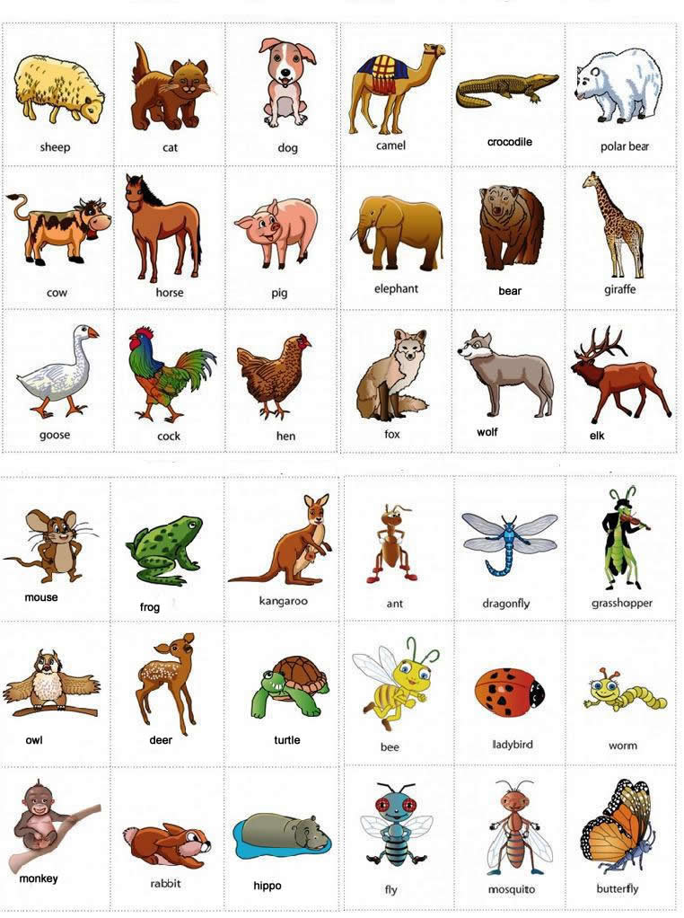 animals names with pictures learning english. Black Bedroom Furniture Sets. Home Design Ideas
