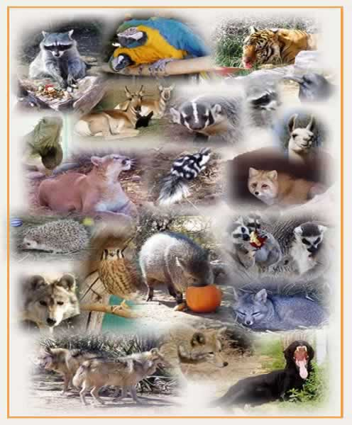 List of common animals a to z list