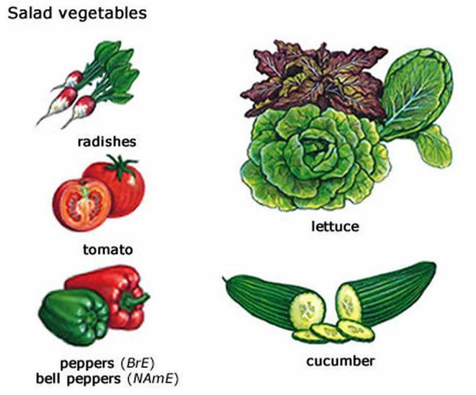 Some of the more common vegetables that are used to make a vegetable salad